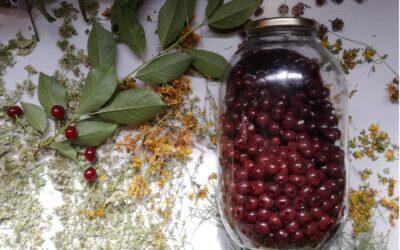 Wiśnia – właściwości i kuchenne inspiracje