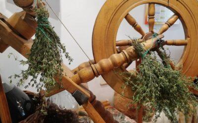 Jak wysuszyć zioła kuchenne?